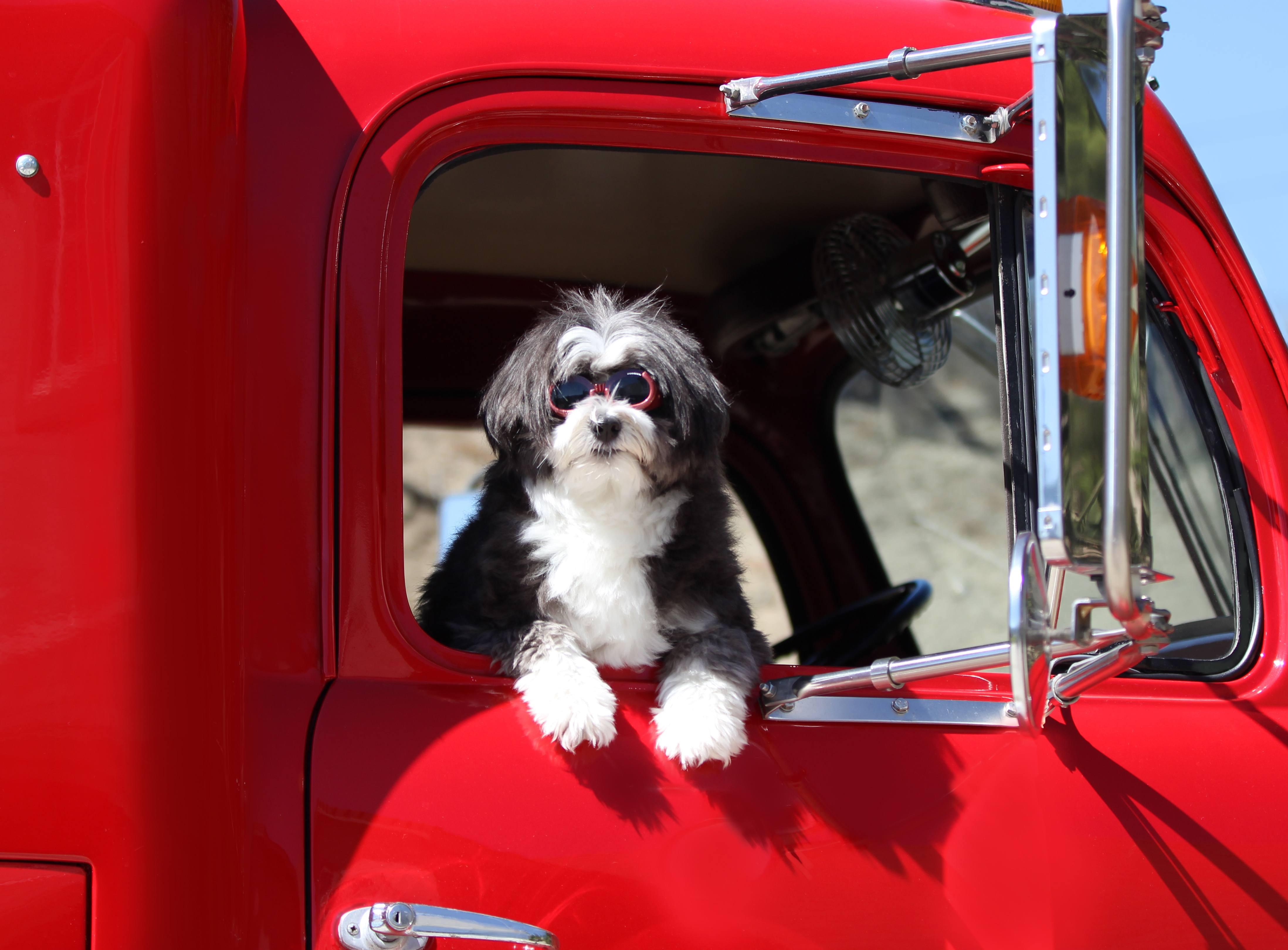 Dog looking out of truck | Wiers